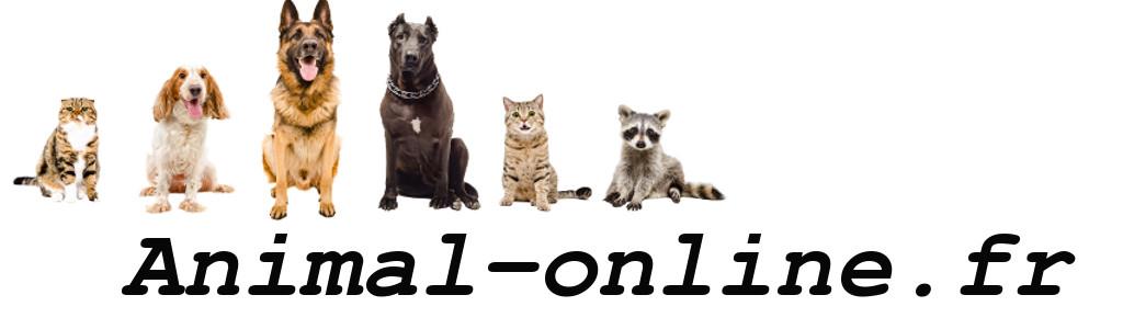 blog passionné d'animaux